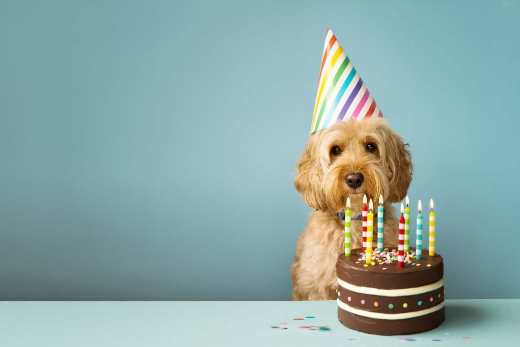 You can only celebrate birthday's with puppies. It's the law